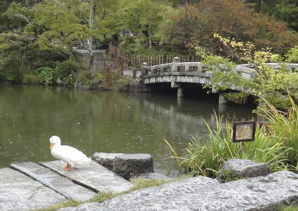 marayuma park kyoto