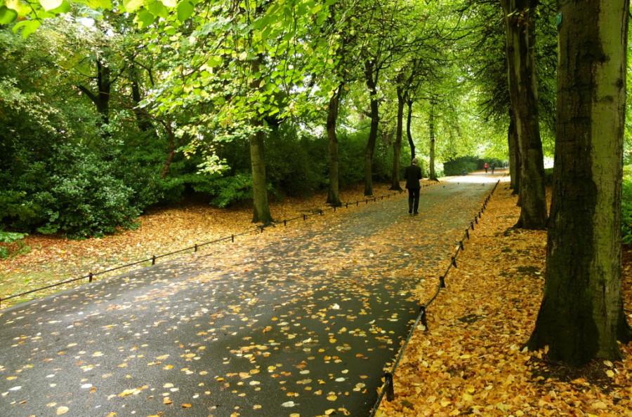 St Stephen's Green fall leaves