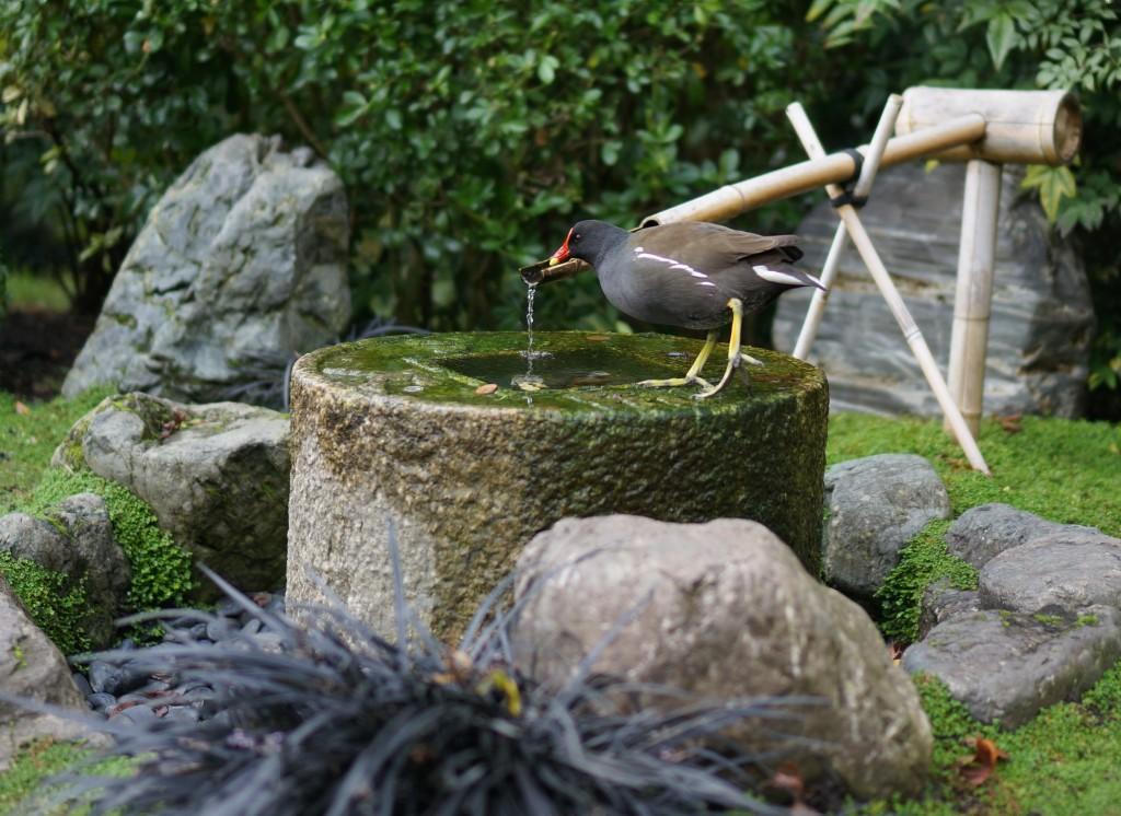 holland park bird drinking bird bath london