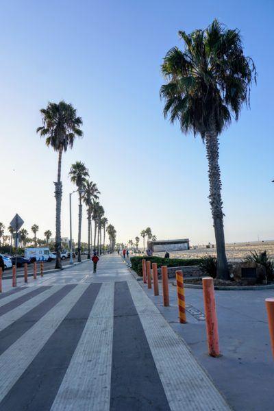 palm trees santa monica